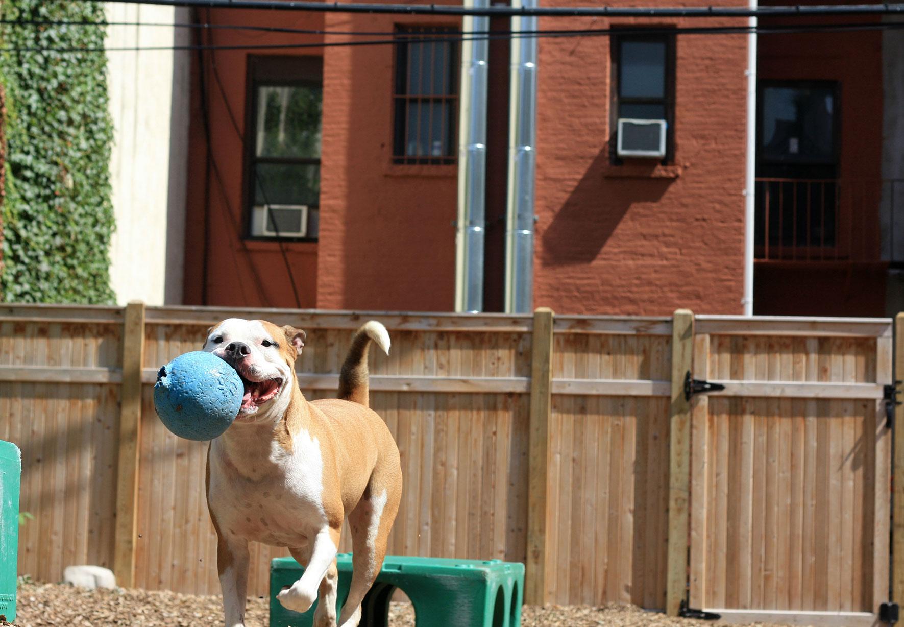 Instinct Dog Training Harlem