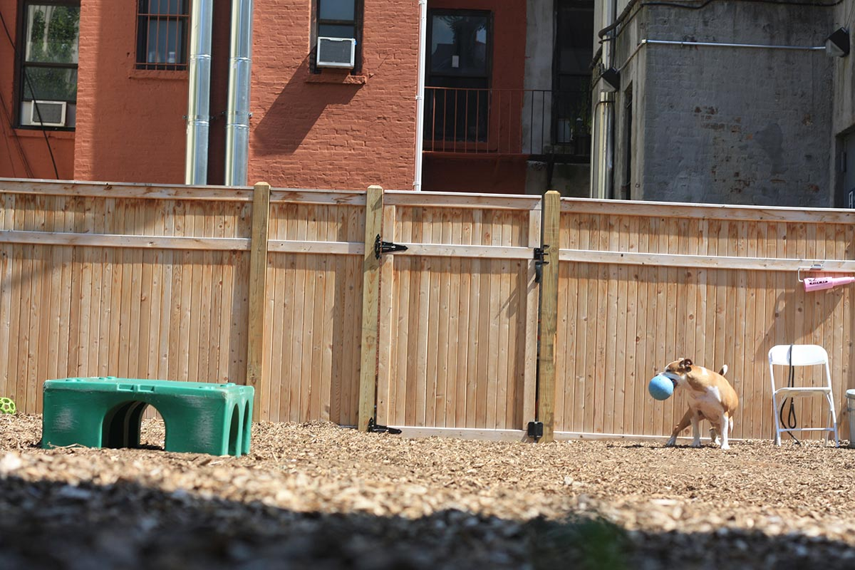 Dog with ball in play yard
