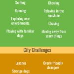 Natural dog behaviors and city challenges